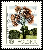 Vintage  Postage Stamp. White Poplar.