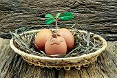 Eggs,plant Inside The Egg,placed In A Basket On The Wooden Background.