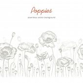 Seamless horizontal background with poppies, hand-drawn illustration.
