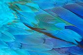 Blue And Gold Macaw Feathers