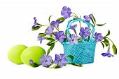 Beautiful Blue Periwinkles In A Basket With Green Eggs Isolated On White Background