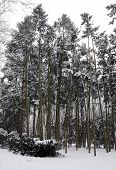 foto of polonia  - Trees coeverd with snow in park in Warsaw Poland - JPG