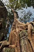 Travel Cambodia concept background - ancient ruins with tree roots, Ta Prohm temple, Angkor, Cambodi