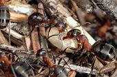 formiche e bozzoli