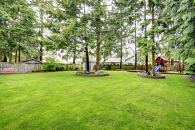 image of grass area  - Fenced backyard with green lawn and fir trees - JPG