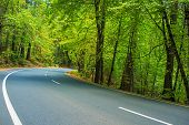 stock photo of paved road  - Scenic Forest Road in California Sierra Nevada - JPG