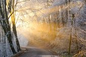 The Sun's Rays Pass Through The Fog In Winter