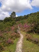 Path through heather on sunny day