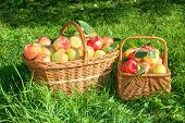 Crop Of Red Juicy Apples In Baskets,thanksgiving Holiday
