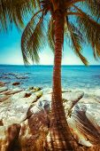 Beautiful Sunny Day At Tropical Beach With Palm Tree. Ocean Landscape In Vintage Style