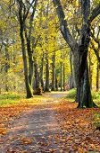 A tree lined pathway in autumn