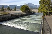 stock photo of fresh water fish  - Fish ladders and flowing fresh water Bonneville Oregon - JPG