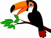 stock photo of toucan  - Vector illustration of Cartoon toucan bird on a tree branch - JPG