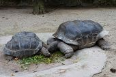 Two Turtles In Zoo