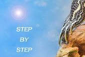 foto of craw  - metaphor of step by step with leg of turtle - JPG