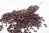 Roasted Coffee Beans With Transfer Scoop