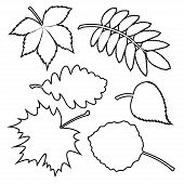 Set of silhouette leaves.