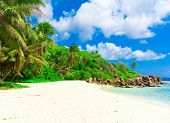 Palms Landscape Summertime