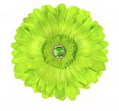 Green Germini Daisy Zinnia Flower
