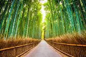 stock photo of bamboo forest  - Kyoto - JPG