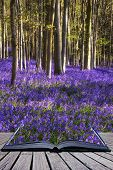 stock photo of harebell  - Creative concept image Beautiful landscape of Spring bluebells in forest - JPG