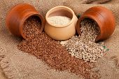 Organic Seeds: Sesame, Flax, Sunflower Seeds