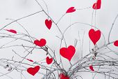 Red hearts hanging on a tree branch. Valentine's Day
