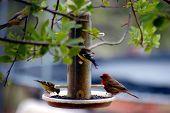 Birds At Feeder One
