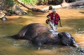 mahout take a bath elephant in waterway