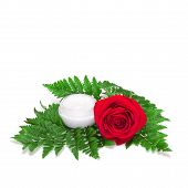 image of fern  - Glass jar filled with cream on green fern leaves next to red rose - JPG