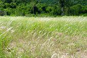 stock photo of prairie  - Green prairie on plains in the mountain - JPG