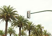 picture of traffic rules  - Urban traffic light against the sky and palm trees near road - JPG
