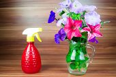 stock photo of petunia  - Colorful petunia blooms in a glass pitcher with spray bottle - JPG