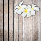 pic of frangipani  - Close up white and yellow frangipani flower on wood background - JPG