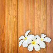 picture of frangipani  - Close up white and yellow frangipani flower on wood background - JPG