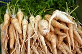 picture of root-crops  - Root parsley on display in food market in Tel Aviv Israel - JPG