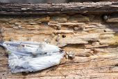 foto of baby spider  - Close up view of Spider egg sack and spider hatchlings on the underside of a log - JPG