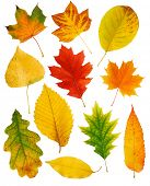 stock photo of fall leaves  - Fall leaves - JPG