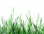 Editable vector foreground design of rough grass
