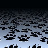 Design of dog paw prints on a floor