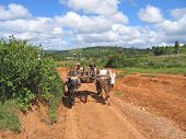 Birman Farmers Driving A Cart, Kalaw, Myanmar