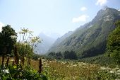 High Meadow In Caucasus