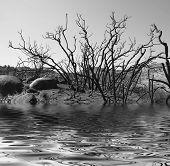 Monochrome Lake Water