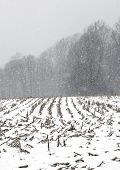 Rural Farmland In A Snow Storm