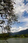 Raintree at lake garden
