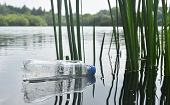 A Carelessly Discarded Plastic Water Bottle Floats Amongst Reeds In A Lake poster