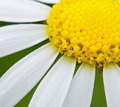 Beautiful flower in the field in spring