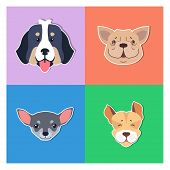 Four Canine Heads Of Pedigreed Dogs Set On Colored Background. Vector Illustration Of Heavy Bernese  poster