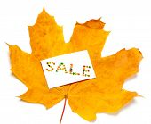 Autumn Yellow Maple-leaf And White Price Card With Word Sale Composed Of Autumnal Maple Leaves. Isol poster