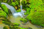 Green moss with water stream